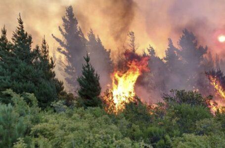 El Sur: fuego en primera persona